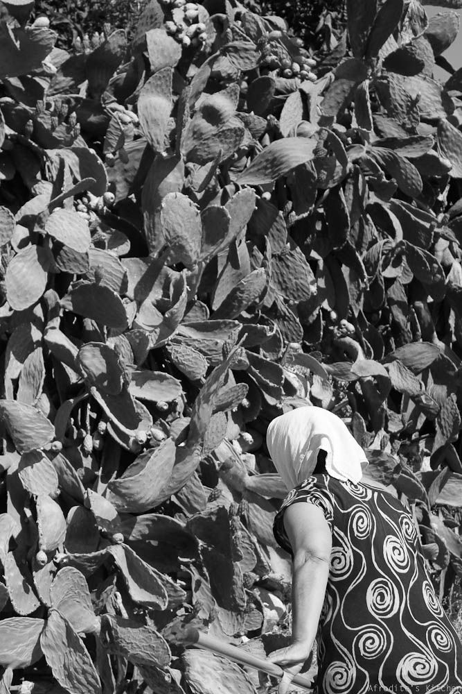 CactusPearFruitSalad-0973